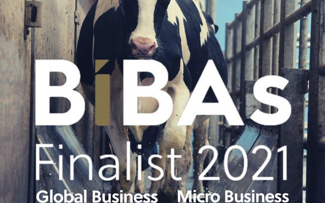 Biba's finalists in two categories